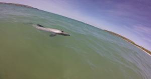 dolphin4